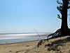 Chandipur_Sea_in_lowtide1.jpg